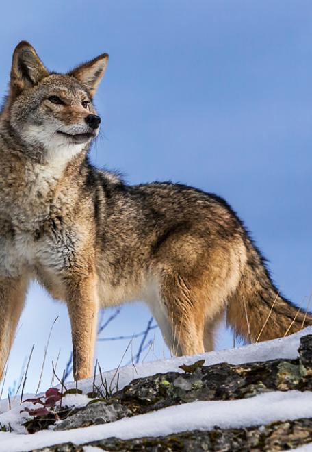 Montana Wildlife Animal Shoot